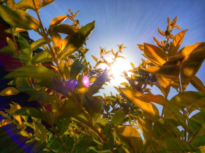 plant sun